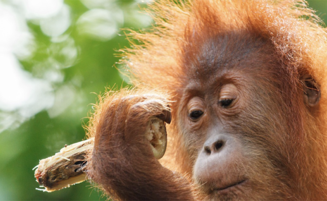 Borneo 2021
